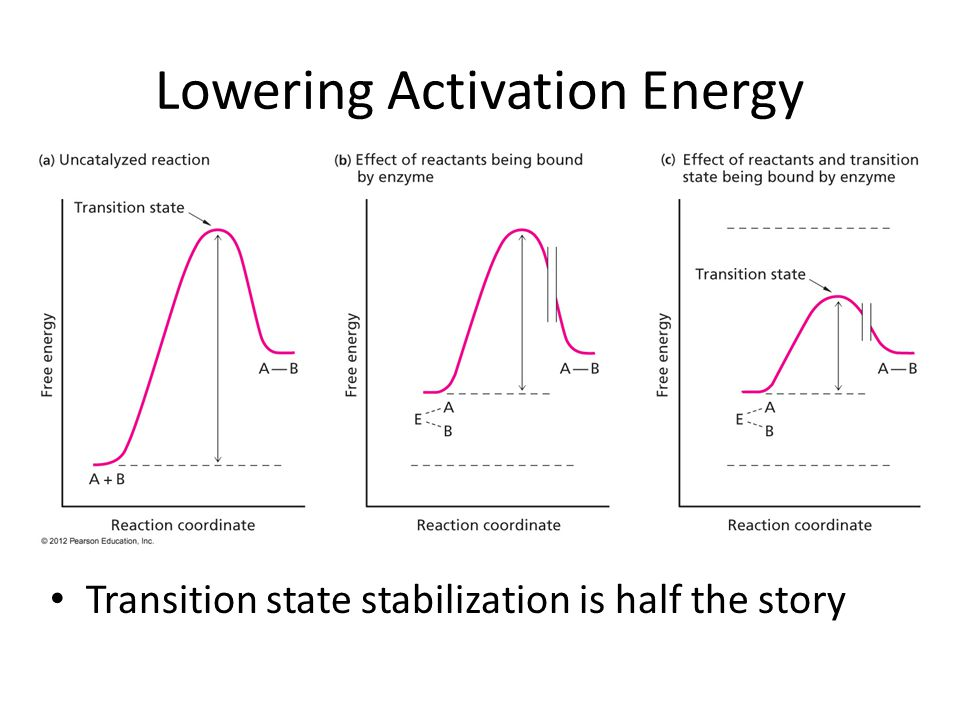 Lowering Activation Energy Transition state stabilization is half the story