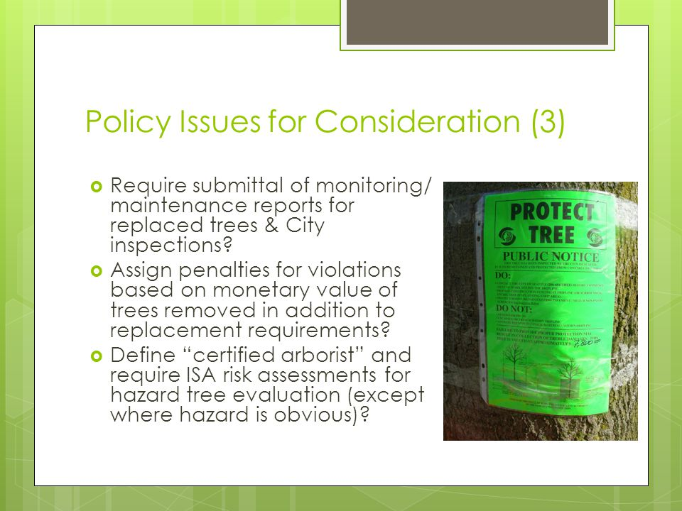 Policy Issues for Consideration (3) Require submittal of monitoring/ maintenance reports for replaced trees & City inspections.