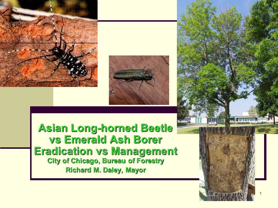 1 Asian Long-horned Beetle vs Emerald Ash Borer Eradication vs Management City of Chicago, Bureau of Forestry Richard M.