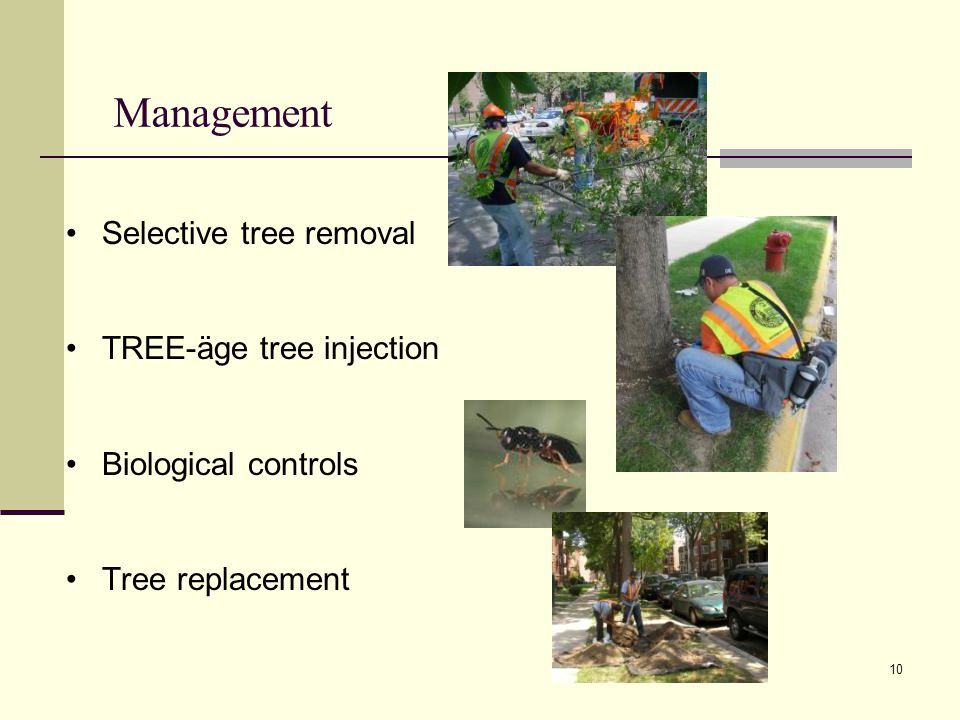 10 Selective tree removal TREE-äge tree injection Biological controls Tree replacement Management