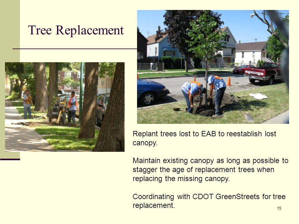 15 Replant trees lost to EAB to reestablish lost canopy.