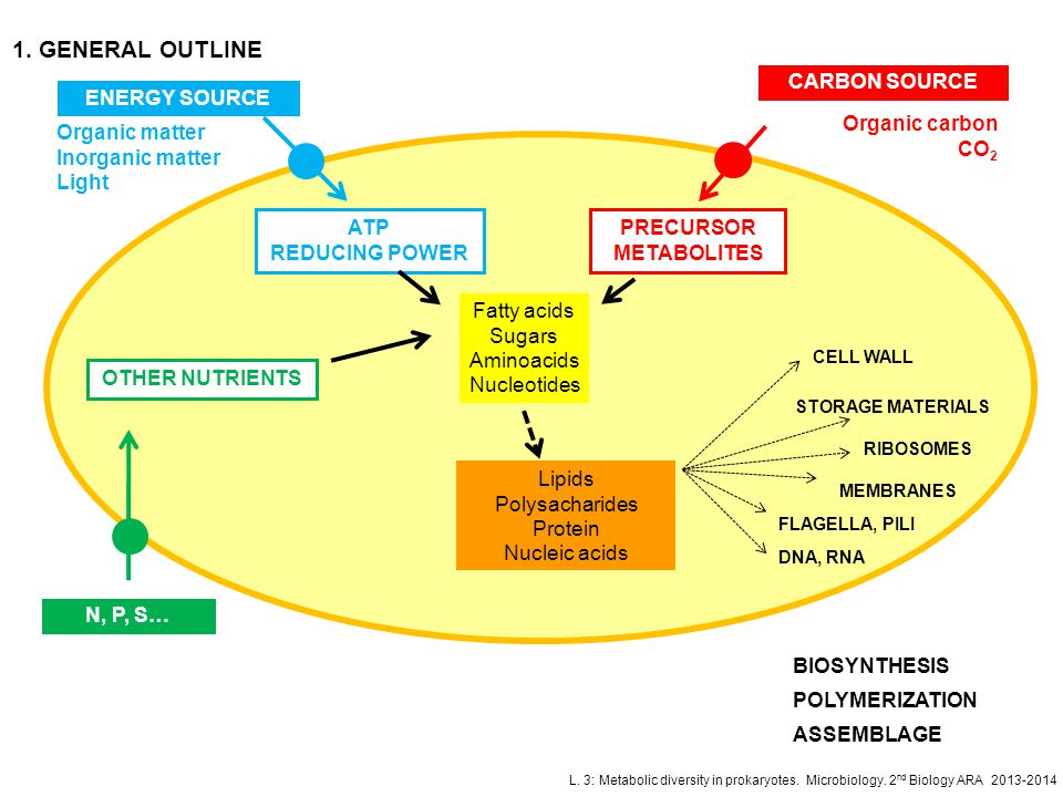 L. 3: Metabolic diversity in prokaryotes. Microbiology. 2 nd Biology ARA 2013-2014 1. GENERAL OUTLINE ENERGY SOURCE ATP REDUCING POWER CARBON SOURCE P