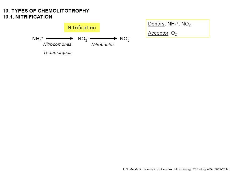 L. 3: Metabolic diversity in prokaryotes. Microbiology. 2 nd Biology ARA 2013-2014 10. TYPES OF CHEMOLITOTROPHY 10.1. NITRIFICATION NH 4 + NO 2 - NO 3