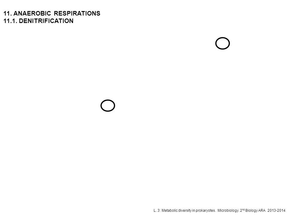 L. 3: Metabolic diversity in prokaryotes. Microbiology. 2 nd Biology ARA 2013-2014 11. ANAEROBIC RESPIRATIONS 11.1. DENITRIFICATION