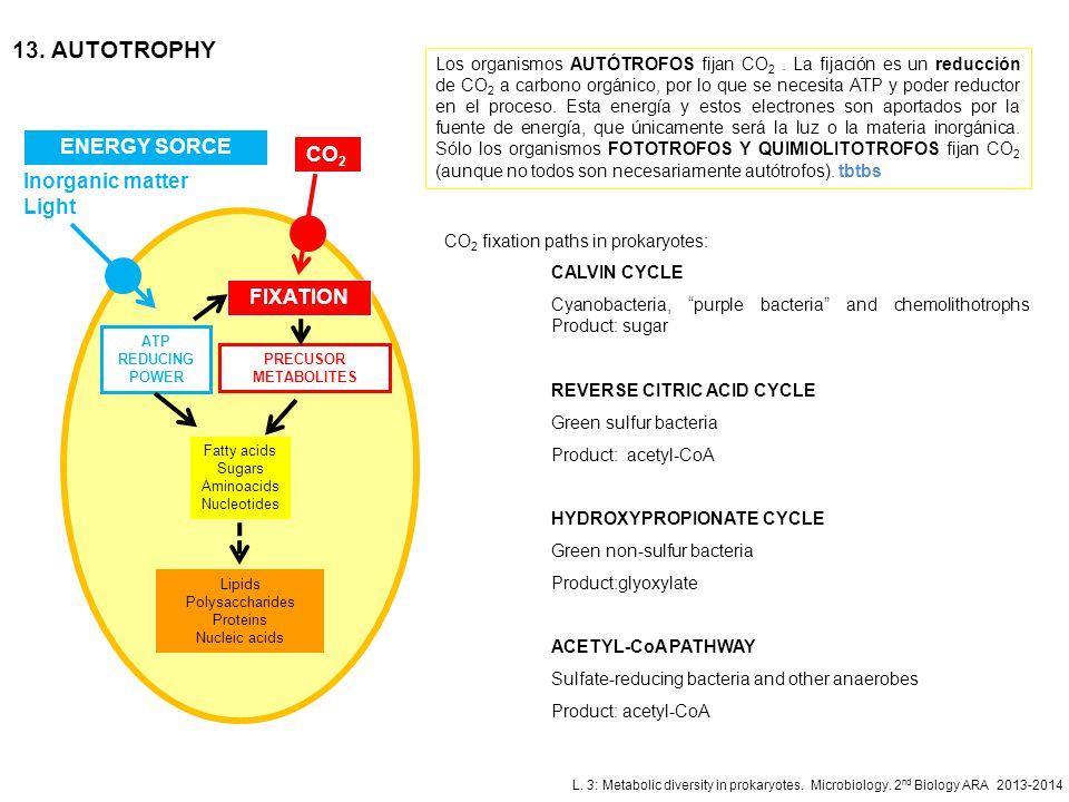 L. 3: Metabolic diversity in prokaryotes. Microbiology. 2 nd Biology ARA 2013-2014 13. AUTOTROPHY ENERGY SORCE ATP REDUCING POWER CO 2 PRECUSOR METABO