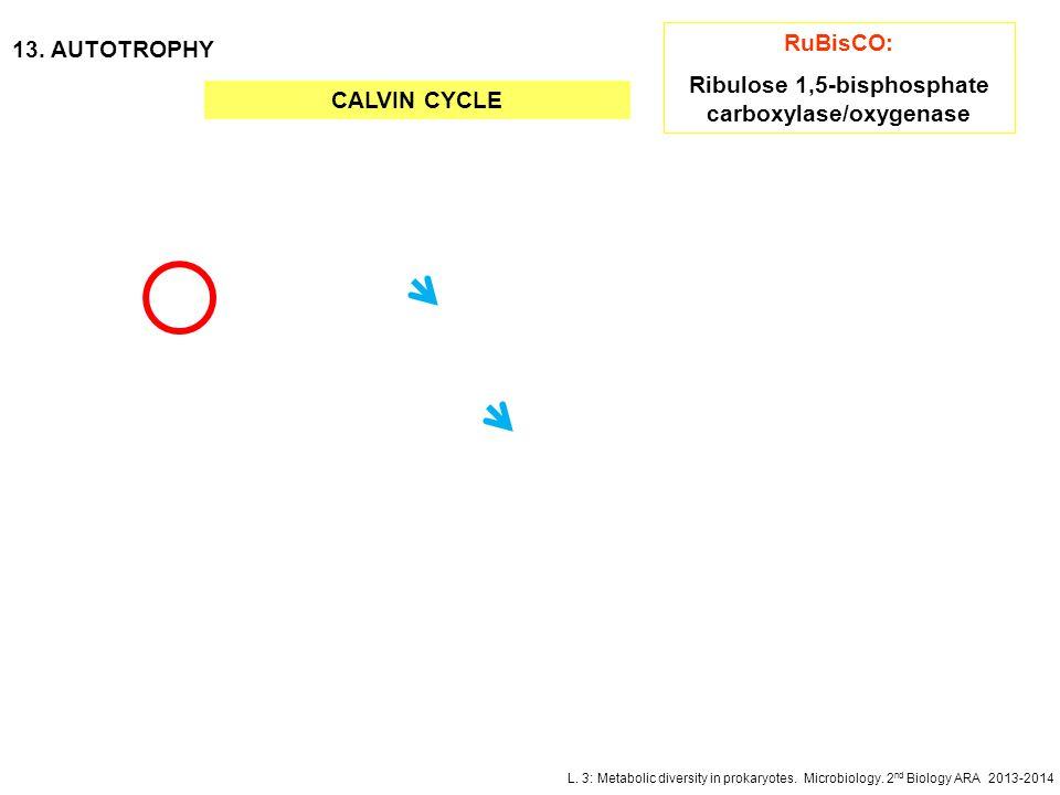 L. 3: Metabolic diversity in prokaryotes. Microbiology. 2 nd Biology ARA 2013-2014 13. AUTOTROPHY CALVIN CYCLE RuBisCO: Ribulose 1,5-bisphosphate carb