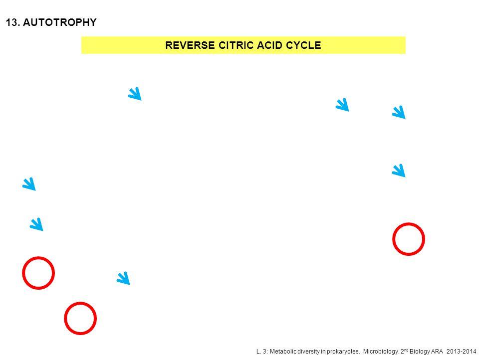 L. 3: Metabolic diversity in prokaryotes. Microbiology. 2 nd Biology ARA 2013-2014 13. AUTOTROPHY REVERSE CITRIC ACID CYCLE