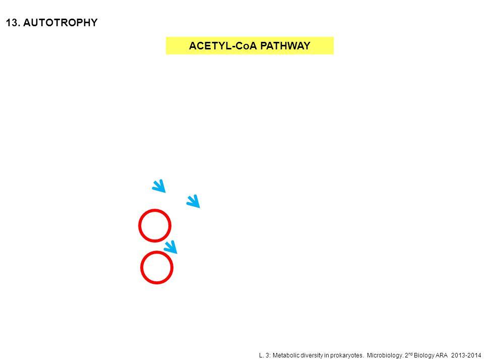 L. 3: Metabolic diversity in prokaryotes. Microbiology. 2 nd Biology ARA 2013-2014 13. AUTOTROPHY ACETYL-CoA PATHWAY