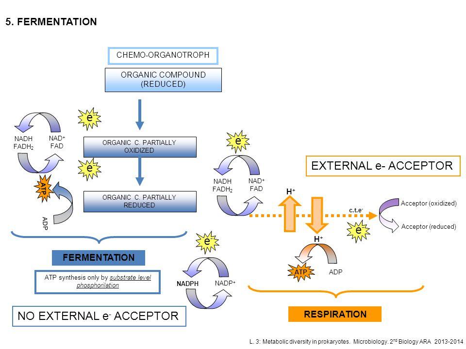 L. 3: Metabolic diversity in prokaryotes. Microbiology. 2 nd Biology ARA 2013-2014 5. FERMENTATION ORGANIC C. PARTIALLY OXIDIZED e-e- NAD + FAD NADH F