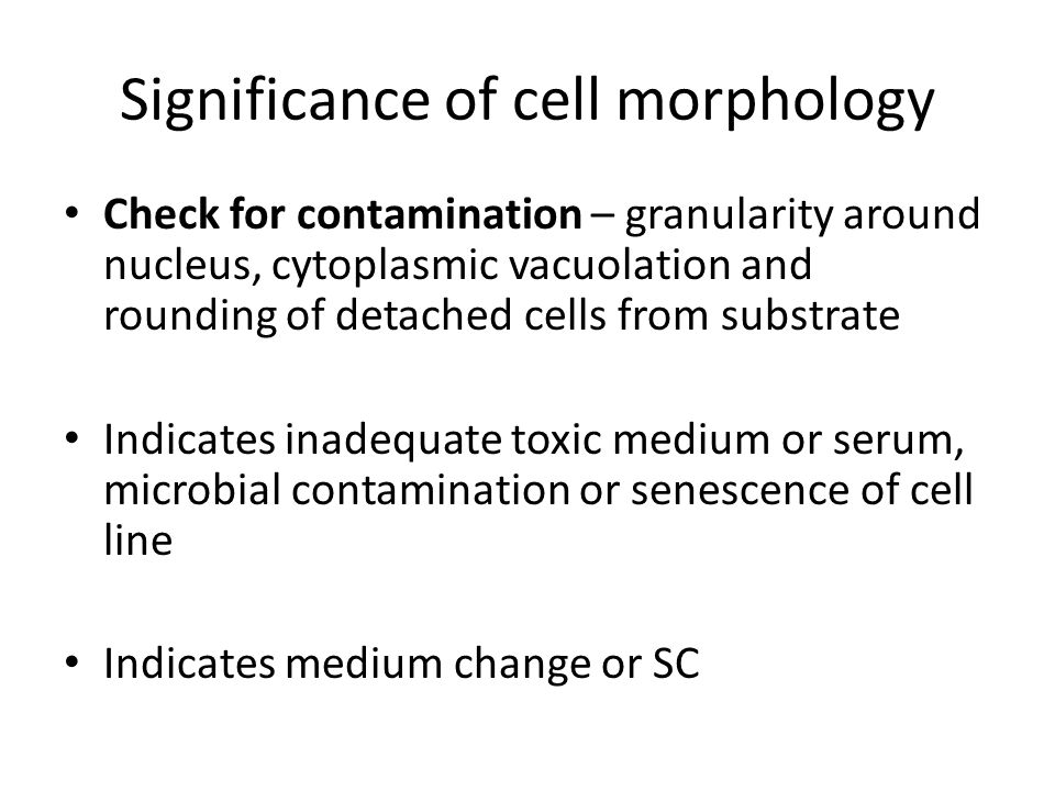 Significance of cell morphology Check for contamination – granularity around nucleus, cytoplasmic vacuolation and rounding of detached cells from subs