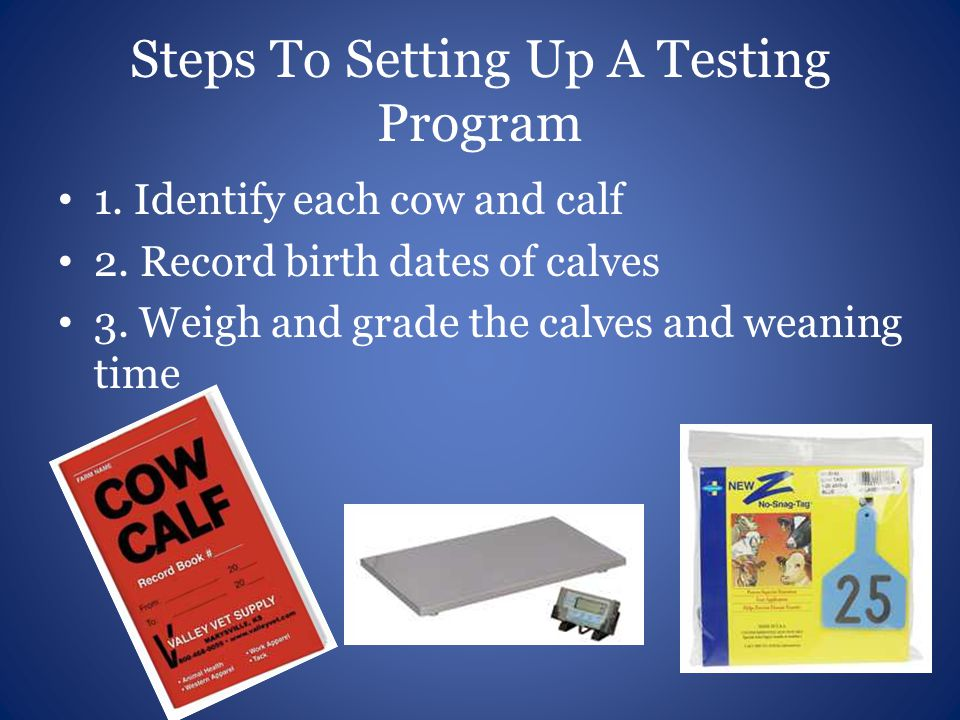 Steps To Setting Up A Testing Program 1. Identify each cow and calf 2. Record birth dates of calves 3. Weigh and grade the calves and weaning time