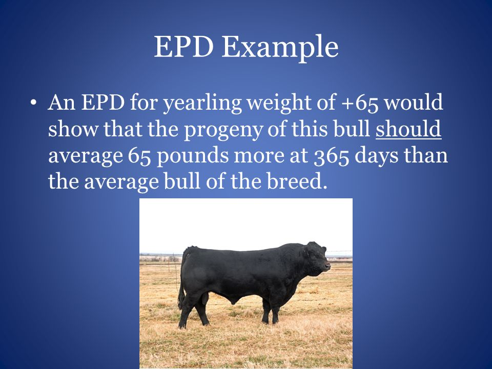 EPD Example An EPD for yearling weight of +65 would show that the progeny of this bull should average 65 pounds more at 365 days than the average bull