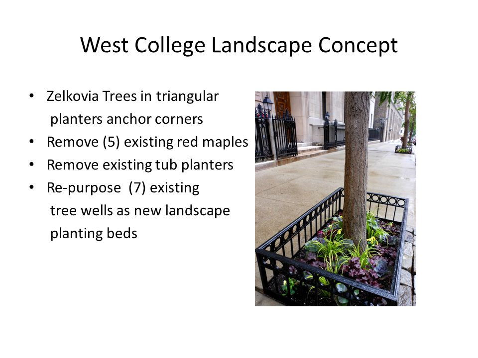 West College Landscape Concept Zelkovia Trees in triangular planters anchor corners Remove (5) existing red maples Remove existing tub planters Re-purpose (7) existing tree wells as new landscape planting beds