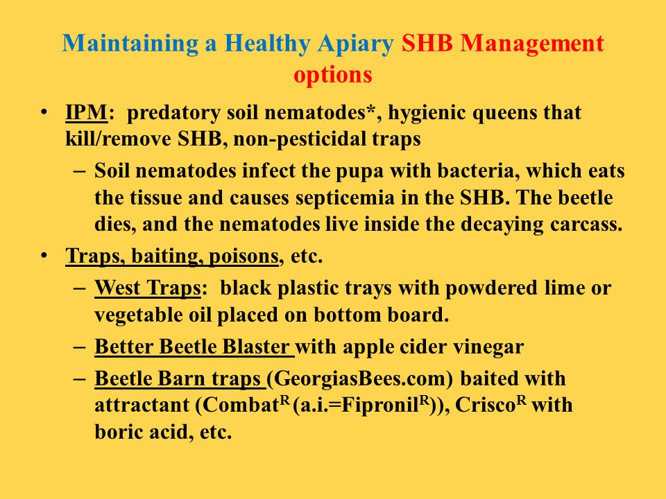 Maintaining a Healthy Apiary SHB Management options IPM: predatory soil nematodes*, hygienic queens that kill/remove SHB, non-pesticidal traps – Soil