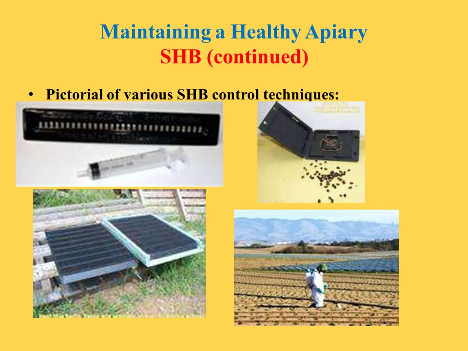 Maintaining a Healthy Apiary SHB (continued) Pictorial of various SHB control techniques: