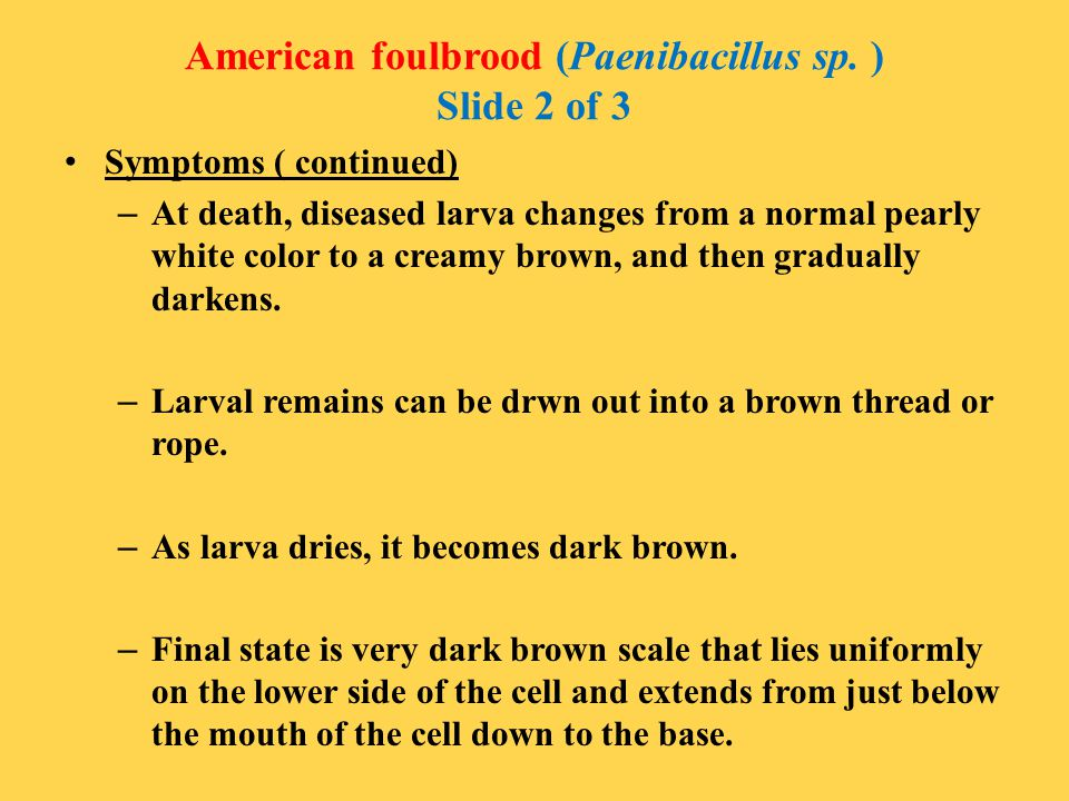 American foulbrood (Paenibacillus sp. ) Slide 2 of 3 Symptoms ( continued) – At death, diseased larva changes from a normal pearly white color to a cr