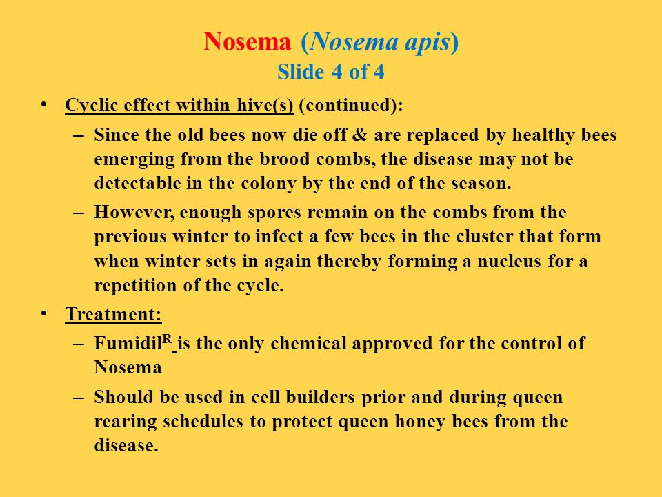 Nosema (Nosema apis) Slide 4 of 4 Cyclic effect within hive(s) (continued): – Since the old bees now die off & are replaced by healthy bees emerging f
