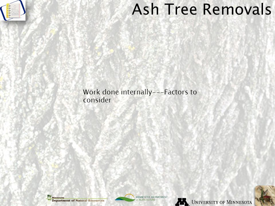 Ash Tree Removals Work done internally---Factors to consider