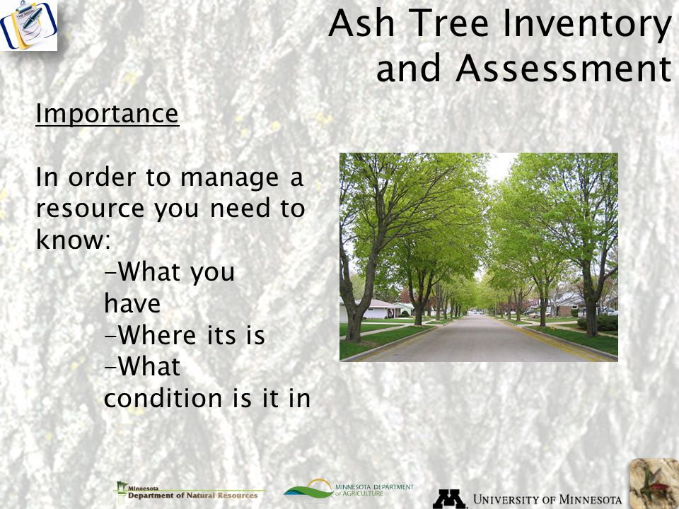 Ash Tree Inventory and Assessment Importance In order to manage a resource you need to know: -What you have -Where its is -What condition is it in