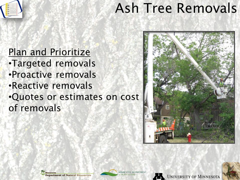 Ash Tree Removals Plan and Prioritize Targeted removals Proactive removals Reactive removals Quotes or estimates on cost of removals