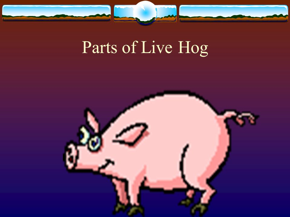Selection and Judging of Swine Objectives Identifying Parts of a Live Hog Select High-quality Breeding Stock Correctly Place and Give Oral Reason for