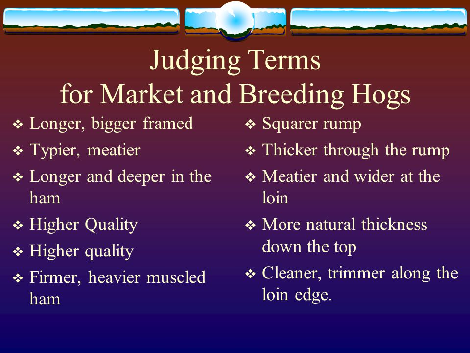 Breeding Hogs Breeding hogs should have the same body traits as market hogs. In addition, the following points are used in judging. 1. Underline : The