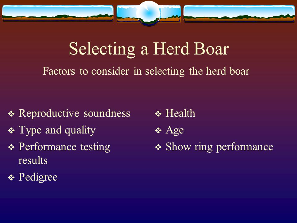 Selecting a Herd Boar Reproductive soundness Type and quality Performance testing results Pedigree Health Age Show ring performance Factors to consider in selecting the herd boar