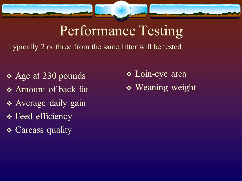 Performance Testing Age at 230 pounds Amount of back fat Average daily gain Feed efficiency Carcass quality Loin-eye area Weaning weight Typically 2 or three from the same litter will be tested
