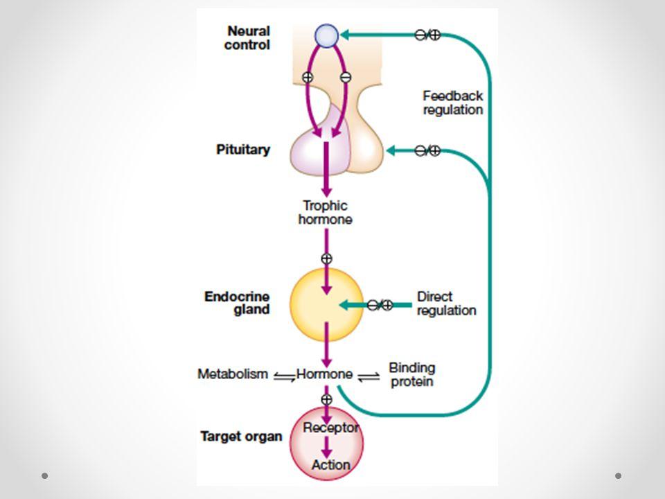 Hypothalamus GnRH TRHDopamineCRH GHR H