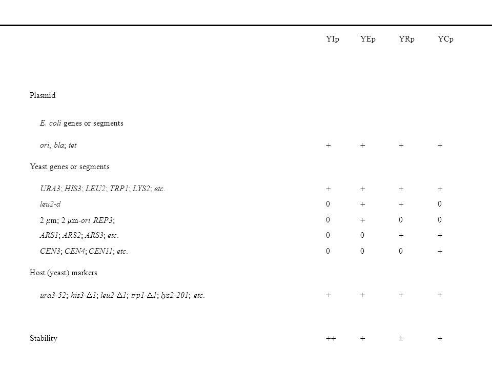 YIpYEpYRpYCp Plasmid E. coli genes or segments ori, bla; tet ++++ Yeast genes or segments URA3; HIS3; LEU2; TRP1; LYS2; etc. ++++ leu2-d0 ++ 0 2 m; 2