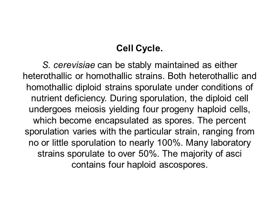 Cell Cycle.S. cerevisiae can be stably maintained as either heterothallic or homothallic strains.