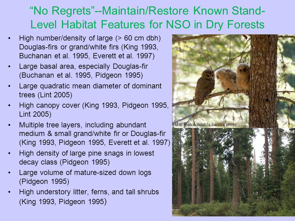 No Regrets--Maintain/Restore Known Stand- Level Habitat Features for NSO in Dry Forests High number/density of large (> 60 cm dbh) Douglas-firs or grand/white firs (King 1993, Buchanan et al.