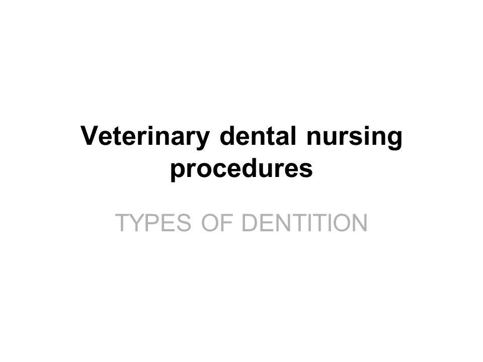 TYPES OF DENTITION Veterinary dental nursing procedures TYPES OF DENTITION