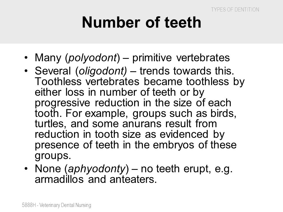 TYPES OF DENTITION 5888H - Veterinary Dental Nursing Number of teeth Many (polyodont) – primitive vertebrates Several (oligodont) – trends towards thi