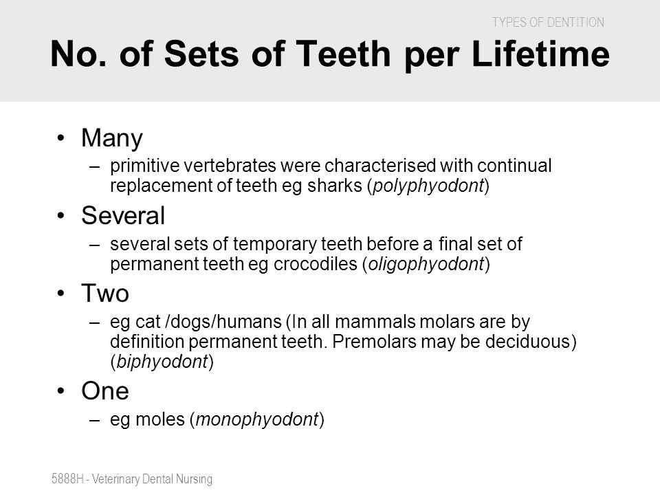 TYPES OF DENTITION 5888H - Veterinary Dental Nursing No. of Sets of Teeth per Lifetime Many –primitive vertebrates were characterised with continual r