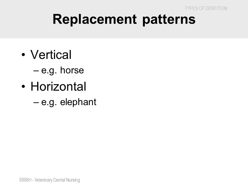 TYPES OF DENTITION 5888H - Veterinary Dental Nursing Replacement patterns Vertical –e.g. horse Horizontal –e.g. elephant