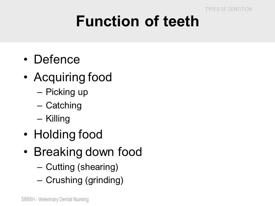 TYPES OF DENTITION 5888H - Veterinary Dental Nursing Function of teeth Defence Acquiring food –Picking up –Catching –Killing Holding food Breaking dow