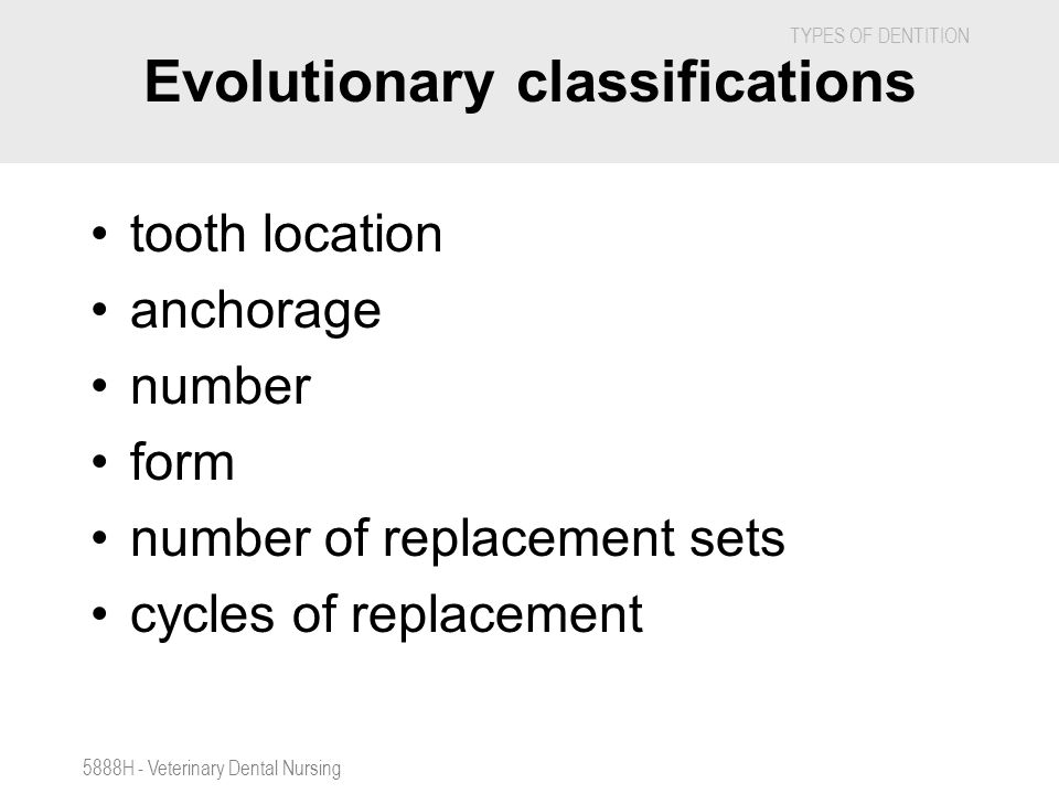 TYPES OF DENTITION 5888H - Veterinary Dental Nursing Evolutionary classifications tooth location anchorage number form number of replacement sets cycl