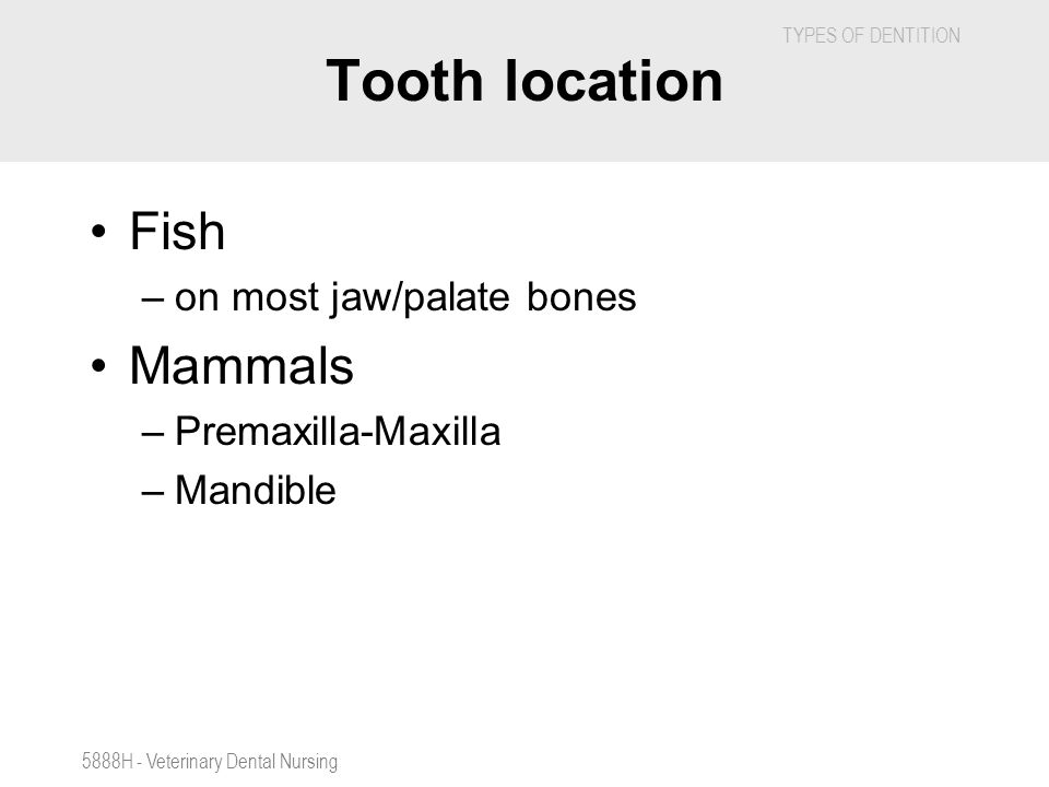 TYPES OF DENTITION 5888H - Veterinary Dental Nursing Tooth location Fish –on most jaw/palate bones Mammals –Premaxilla-Maxilla –Mandible
