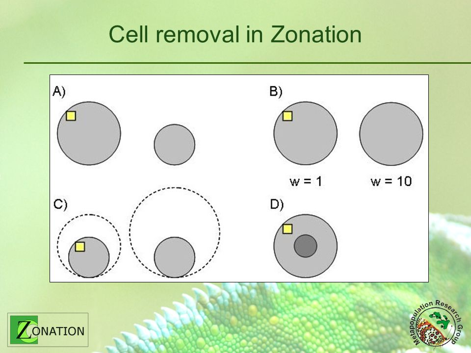 Cell removal in Zonation