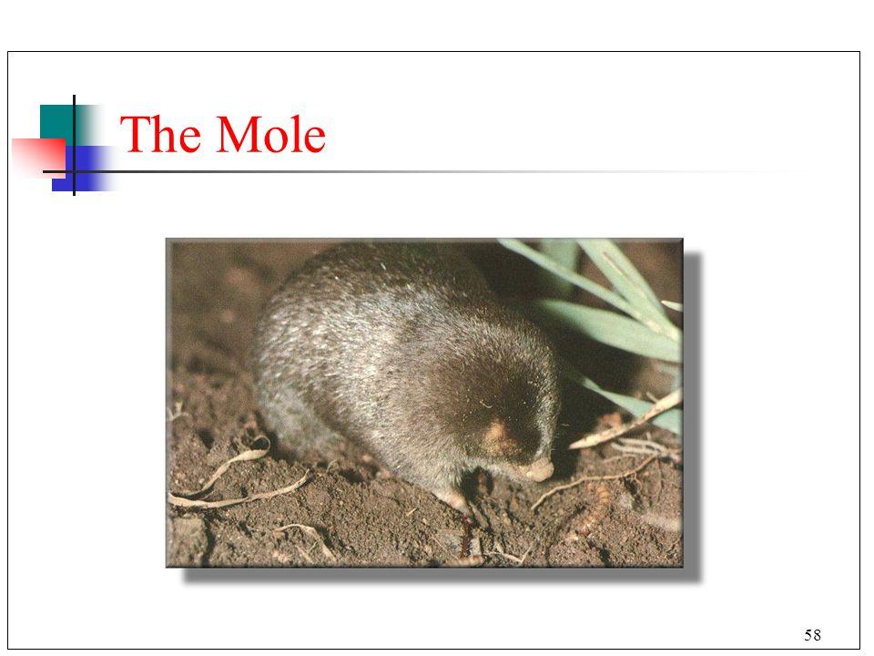 58 The Mole
