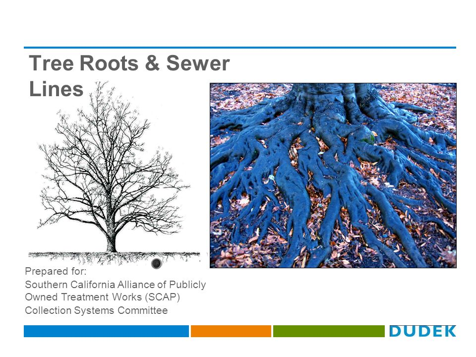 Tree Roots & Sewer Lines Prepared for: Southern California Alliance of Publicly Owned Treatment Works (SCAP) Collection Systems Committee