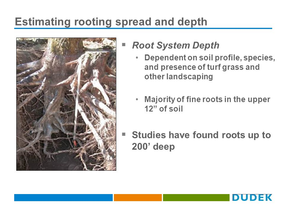 Estimating rooting spread and depth Root System Depth Dependent on soil profile, species, and presence of turf grass and other landscaping Majority of fine roots in the upper 12 of soil Studies have found roots up to 200 deep