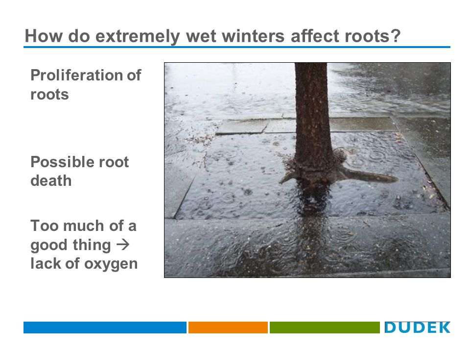 How do extremely wet winters affect roots.