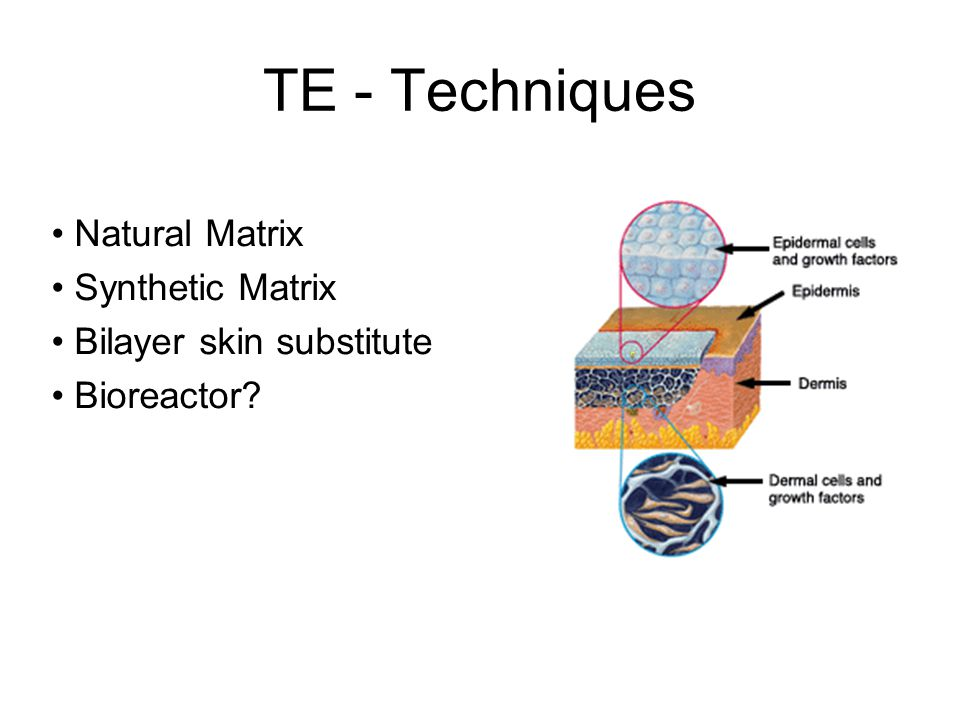 TE - Techniques Natural Matrix Synthetic Matrix Bilayer skin substitute Bioreactor?