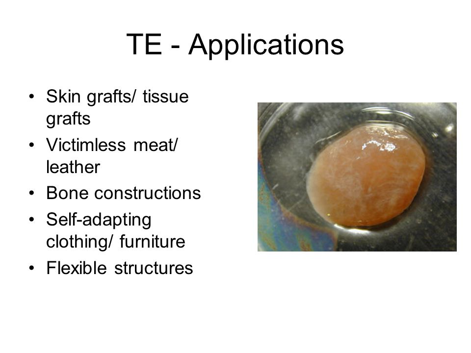 TE - Applications Skin grafts/ tissue grafts Victimless meat/ leather Bone constructions Self-adapting clothing/ furniture Flexible structures