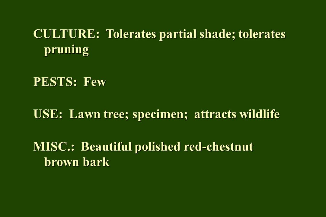 CULTURE: Tolerates partial shade; tolerates pruning PESTS: Few USE: Lawn tree; specimen; attracts wildlife MISC.: Beautiful polished red-chestnut brow