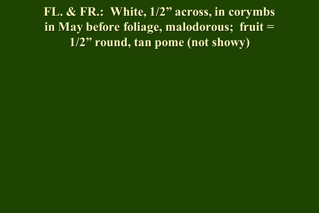 FL. & FR.: White, 1/2 across, in corymbs in May before foliage, malodorous; fruit = 1/2 round, tan pome (not showy)