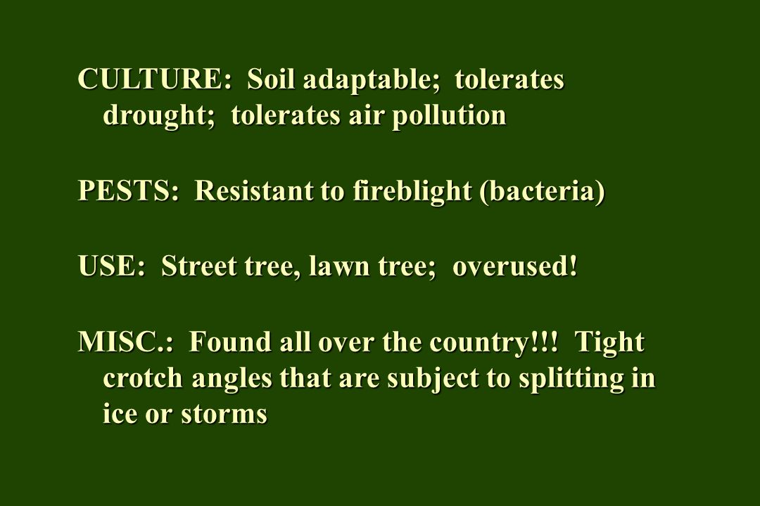 CULTURE: Soil adaptable; tolerates drought; tolerates air pollution PESTS: Resistant to fireblight (bacteria) USE: Street tree, lawn tree; overused! M