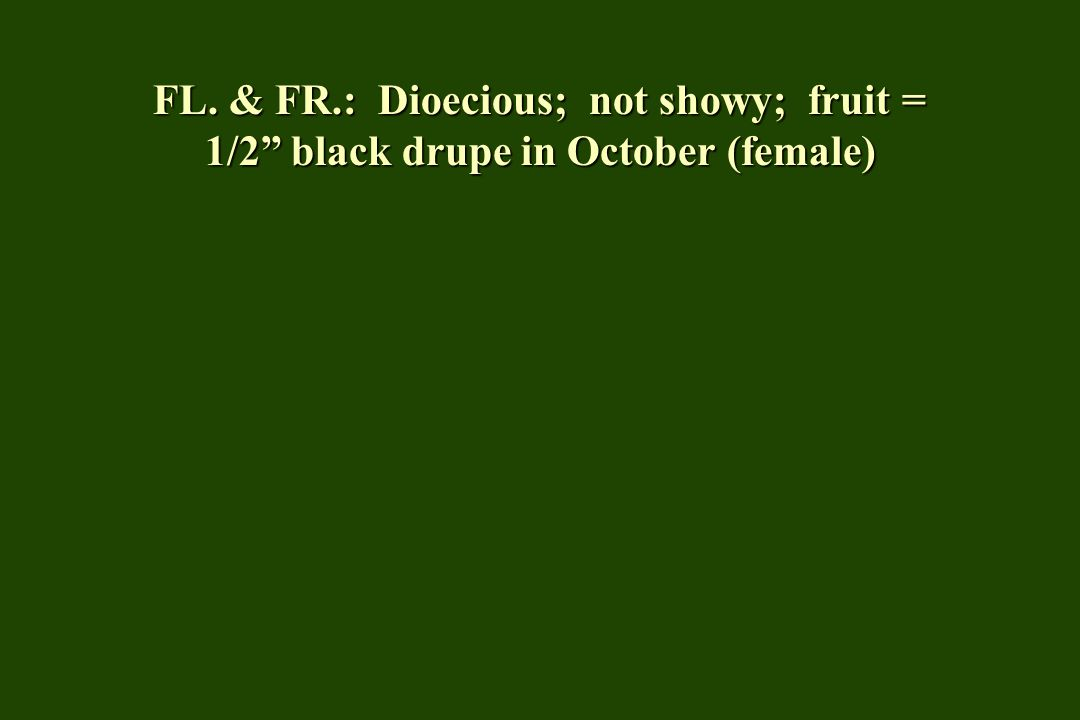 FL. & FR.: Dioecious; not showy; fruit = 1/2 black drupe in October (female)